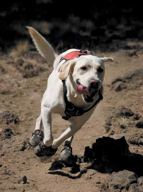 running shoes for dogs index of image boots shoes