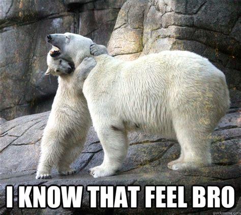 Polar Bear Meme - polar bear hug memes