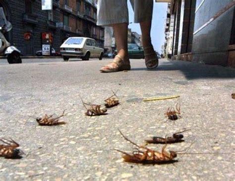 blatte volanti pastena di salerno invasa da scarafaggi donna incinta va