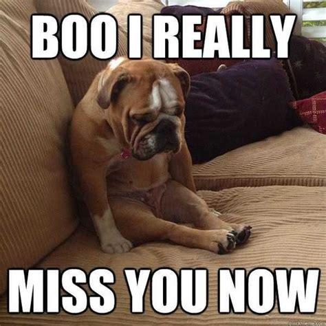 I Miss You Memes - 20 super cute memes that say quot i miss you quot sayingimages com