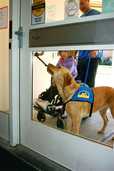 assistance dogs photos from canine companions assistance team sponsorship globalgiving