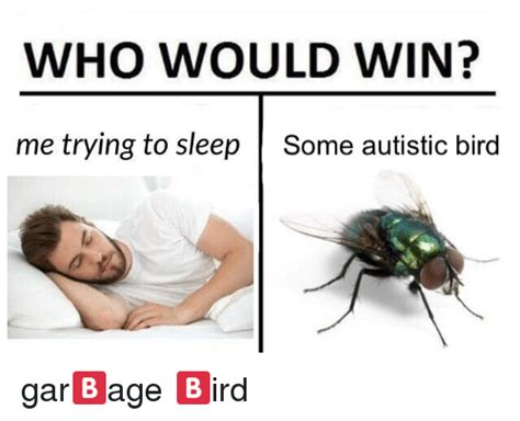 Trying To Sleep Meme - who would win me trying to sleep some autistic bird