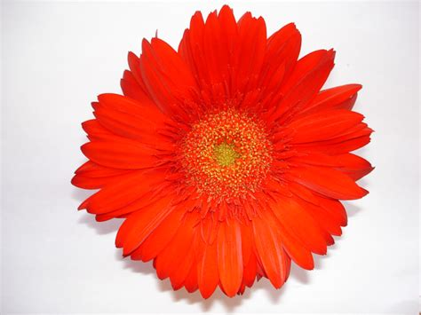 one flower 22