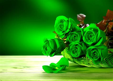 wallpaper of green rose green rose wallpaper www imgkid com the image kid has it