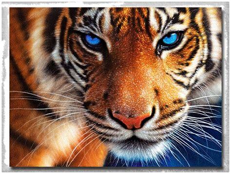 imagenes de leones en movimiento 3d imagenes de tigres en 3d simples imagenes de tigres