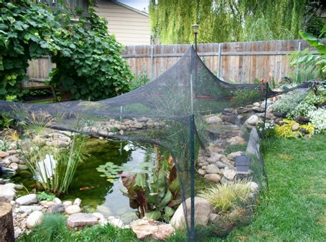 backyard pond maintenance theradmommy