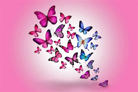 Hintergrundbilder Insekten Schmetterlinge Tiere 5010x3340