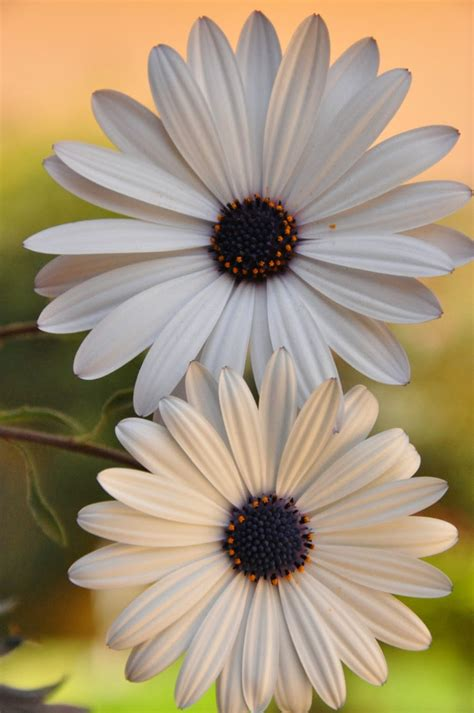 beautiful flowers hd wallpapers  mobile  wallpapergetcom