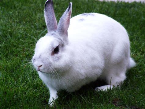 Rabbit White World Tourism Rabbit