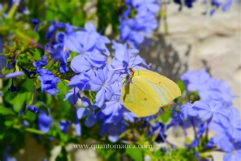 farfalle in casa casa delle farfalle co quantomanca vacanze con