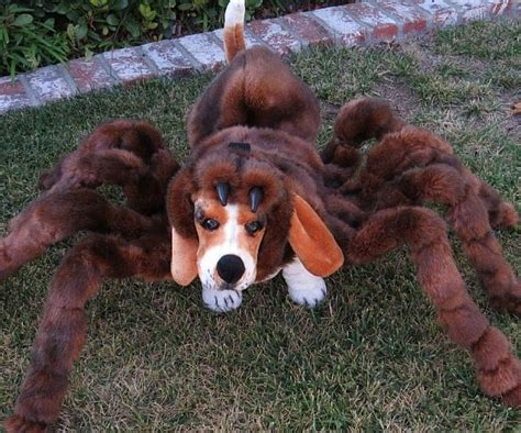 spider costume for dogs spider costumes spider