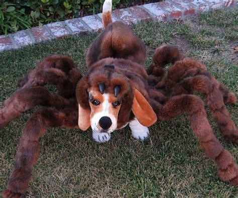 spider puppy spider costumes spider
