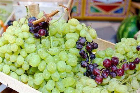 vite uva da tavola quot la vite 232 passione uva da tavola quot il talk de le