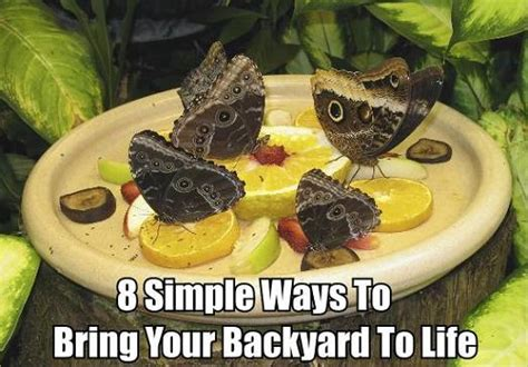 How To Attract Butterflies To Your Backyard by 8 Simple Ways To Attract Wildlife Into Your Backyard Diy