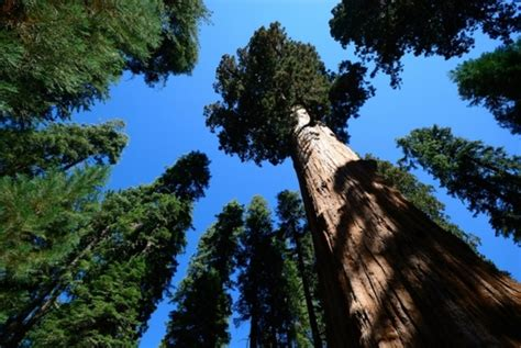 top 10 pictures of trees for day tallest trees in the world k k club 2017