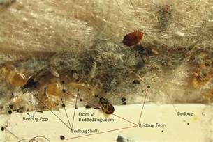 Can Bed Bugs Travel From House To House Bad Bed Bugs Photos Of Bed Bug Bites Infestations And