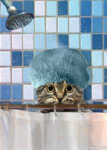 katze duschen cat takes a shower picture by demi for cat