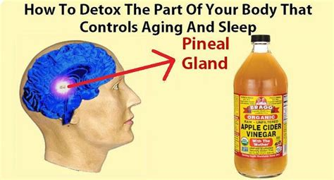 Pineal Gland Detox Foods by Here S How To Detox The Part Of Your That Controls