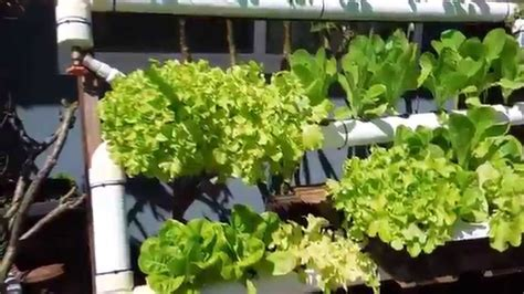 backyard hydroponic garden diy backyard hydroponic garden update youtube