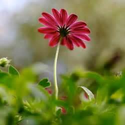 flower photo flower photo doug88888 flickr
