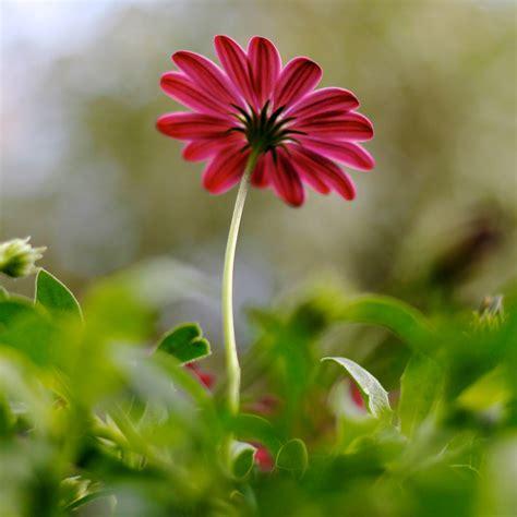 a flower flower photo flower photo doug88888 flickr