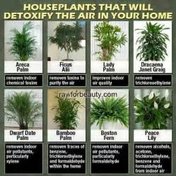17 best images about indoor plants feng shui on pinterest