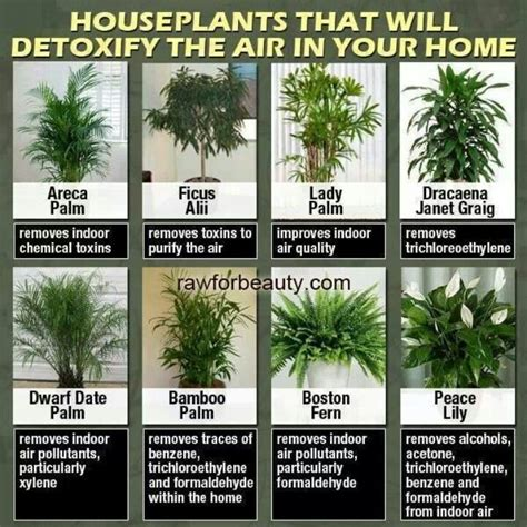 best houseplants for clean air 17 best images about indoor plants feng shui on pinterest