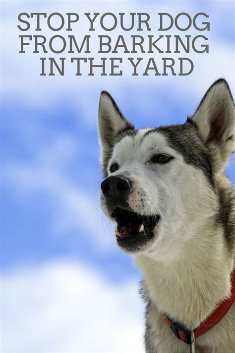 how to stop your puppy from barking how to stop a dog from barking in the yard great dog