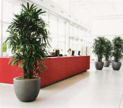 pianta per interni vasi per piante da interni idee creative e innovative