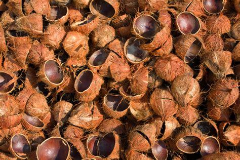 Jual Batok Kelapa Surabaya jual batok kelapa di surabaya tedi