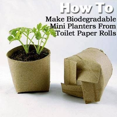 How To Make Starters With Toilet Paper Rolls - toilet paper roll seed starter yard gardening