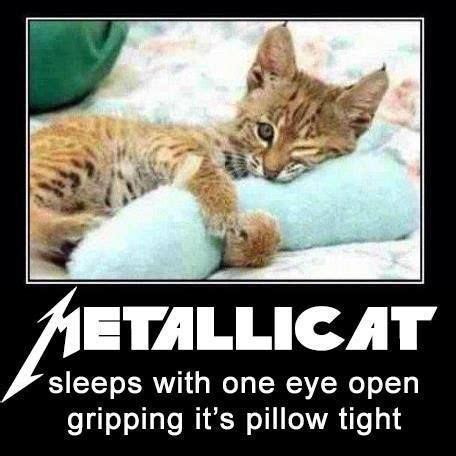 Sleep With One Eye Open Gripping Your Pillow Tight by Metallica Metallicat Sleeps With One Eye Open Gripping