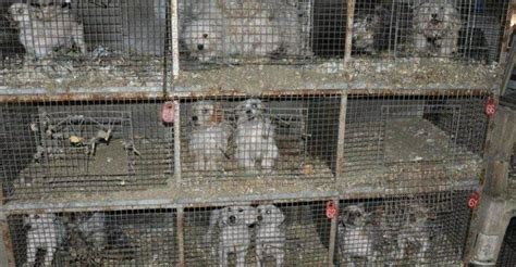 how to report a puppy mill horrible 100 humane society publishes worst puppy mills