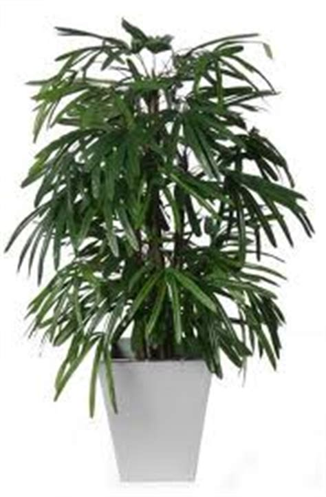 Palm Detox by Detox House Plants Empoweredliving Me