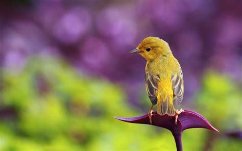 wallpaper flower bird flower bird yellow hd wallpaper freewallsup with flowers
