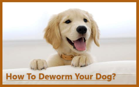 how to deworm a puppy how to deworm your