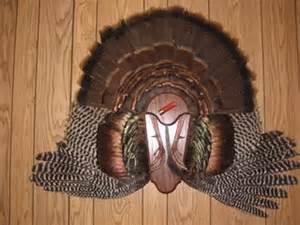 Turkey Fan Mount Template by Do It Youself Turkey Mount Next Buck Outdoors