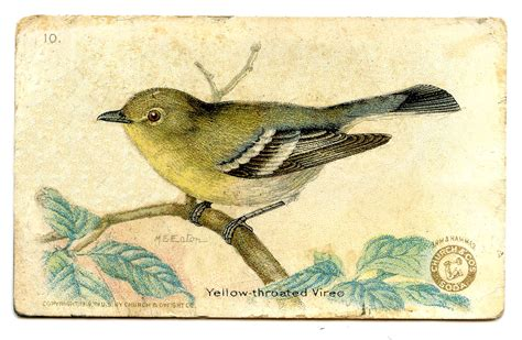 free vintage clip art 3 more bird advertising cards