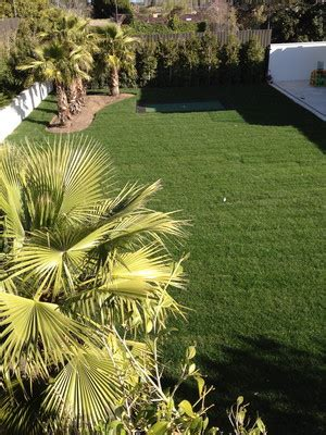 true green landscaping green landscaping in carlton melbourne vic landscaping