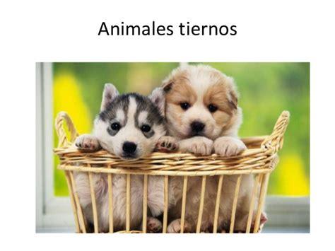 imagenes de animales xilofagos animales tiernos