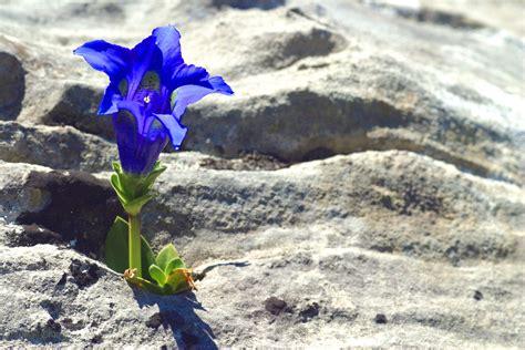 fiore portafortuna 6 fiori portafortuna per il 2017 fito