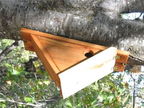 side hole nest box chickadee bird houses pinterest