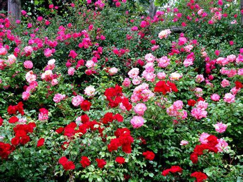 bonsai fiori bonsai e fiori