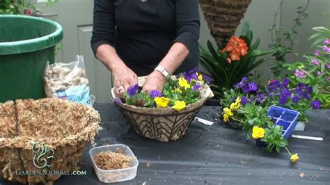 hanging baskets easy pansy youtube