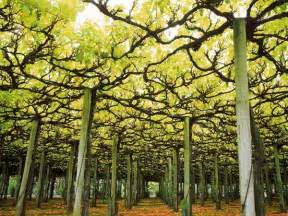 Expanding Garden Trellis Vineyard Photos National Geographic