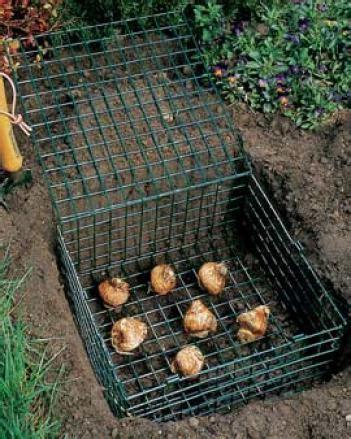 talpe in giardino cosa fare bulbi e talpe forum di giardinaggio it
