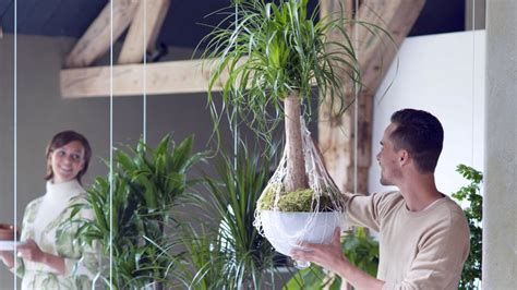 pflanzen raumteiler pflanzen als raumteiler ratgeber hamburger abendblatt
