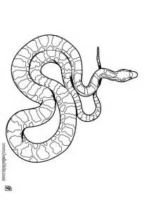 snake coloring page boa snake coloring pages hellokids