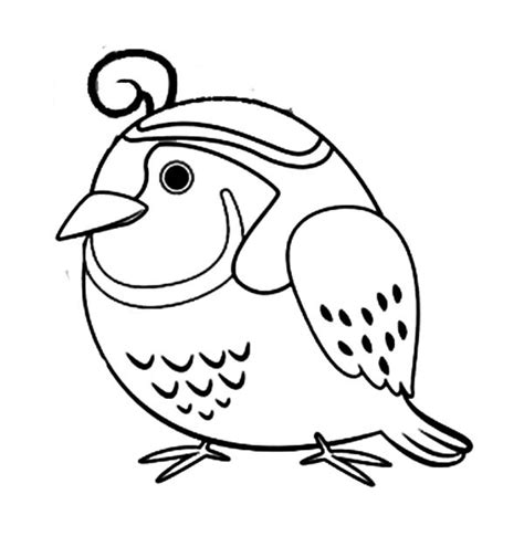coloring page quail quail coloring pages