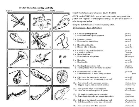 Taxonomy Classification And Dichotomous Worksheet Answers by Protist Dichotomous Key Worksheet Activity